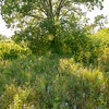 Arden Hills Tall Trees four o'clock pm august (19)