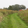 Bruentrup Farm September (7)