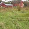 Bruentrup Farm September (6)