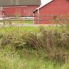 Bruentrup Farm September (9)