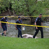 """An officer leads responders along Boulder Creek near the Broadway St. bridge after a shooting in Central Park on Sunday.<br /> More photos:  <a href=""""http://www.dailycamera.com"""">http://www.dailycamera.com</a><br /> Autumn Parry/Staff Photographer<br /> May 22, 2016"""