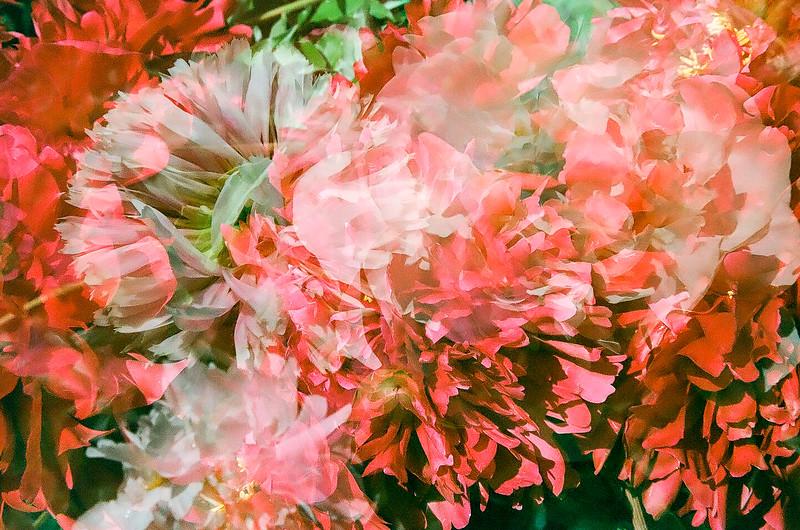 Meadowlark Botanical Gardens, Vienna, VA. May, 2015, Kodak color film.