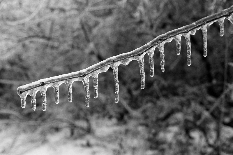Freezing rain in Manassas, Virginia. Ilford Delta 400, Dec 2013.