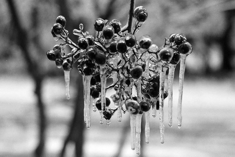 Freezing rain in Manassas, Virginia. Ilford Delta 400, Dec 2013.