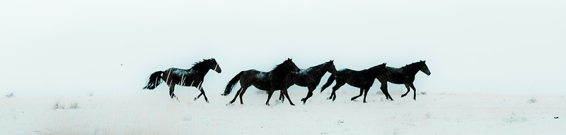 Snowy Plains Brumbies