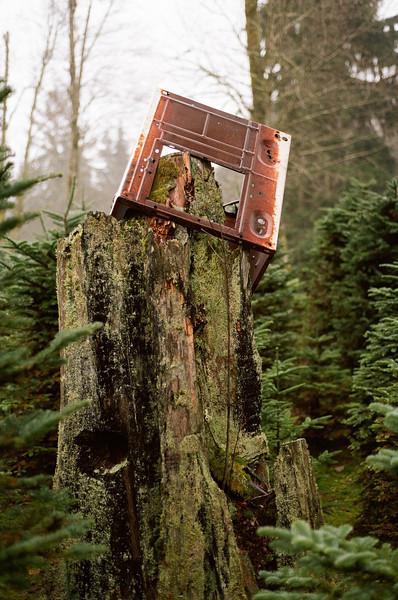Fridge on stump