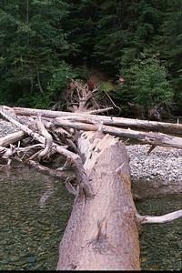 Tree-bridge over South Fork of Sauk River