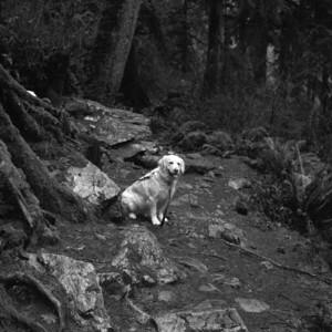 Riley on Boulder River Trail