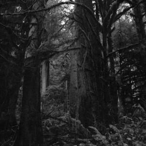 Red Cedars