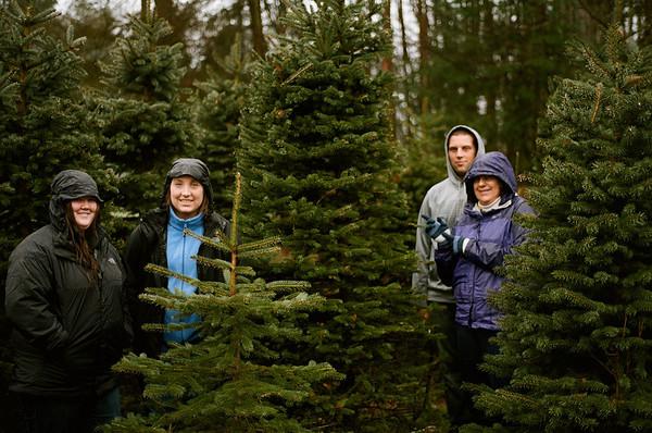 Xmas Tree Hunt 2013