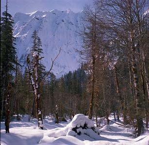 Big 4 Mountain through the trees