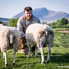 Another one from a  #sheep #farm #farming shoot with Wallace @wallace2612 @rural2kitchen back in May this year.