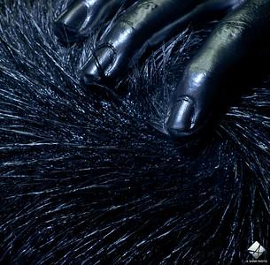 www.asharpphoto.biz - Sloane - 4776