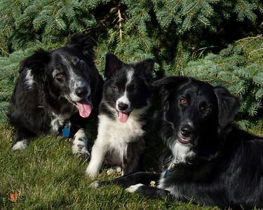 Terry Johnson's Puppy Photos