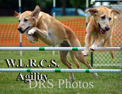 Winnebago Labrador Retriever Club Specialty - Agility