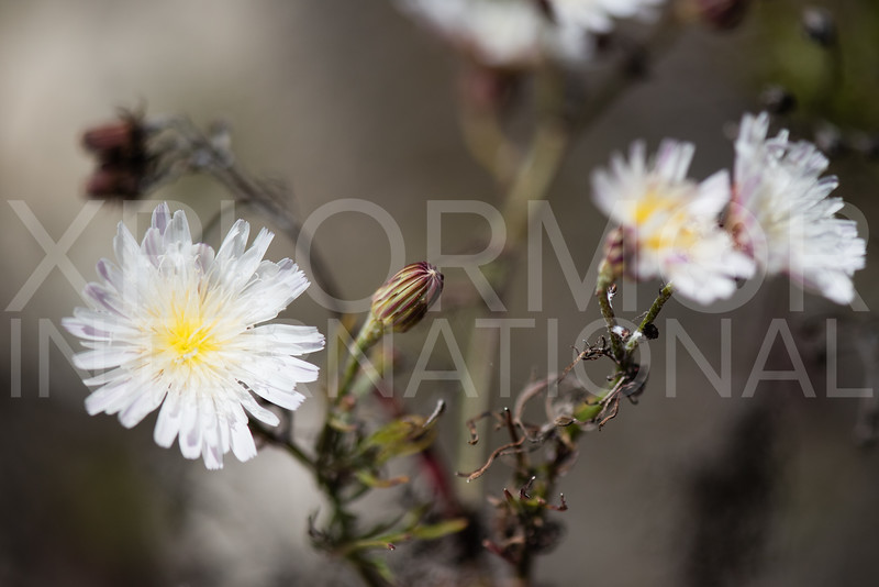 Santa Cruz Yellow and White Flowers