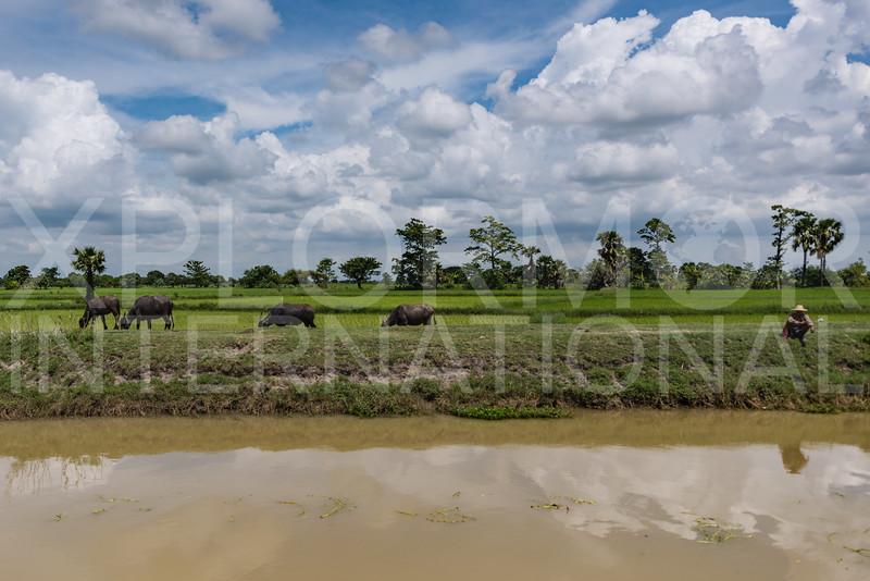 Life in rural Myanmar