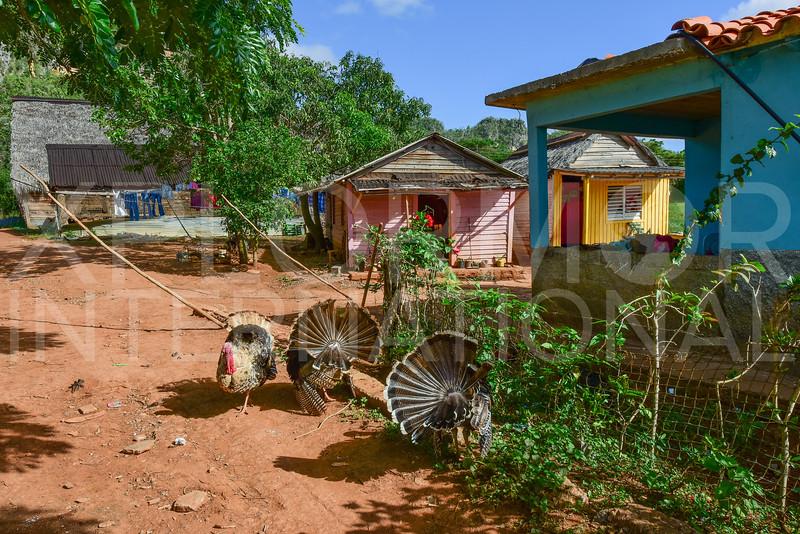 Cuban Farm Life