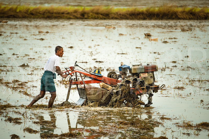 A Machine to Plow the Rice Paddy