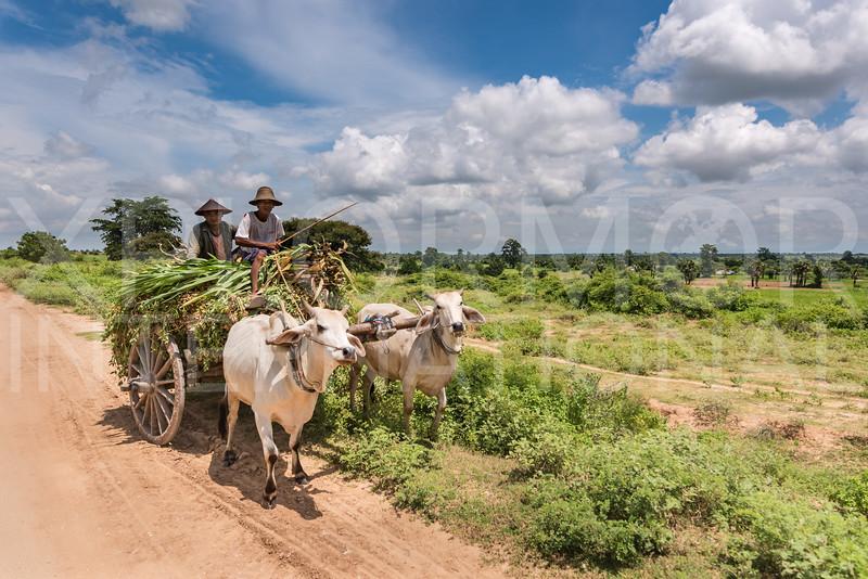 Carting Crops through the Ancient Pyu Kingdom