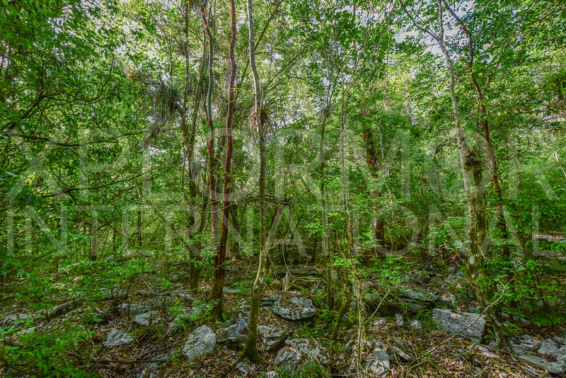 Vinales Lush Green Jungle