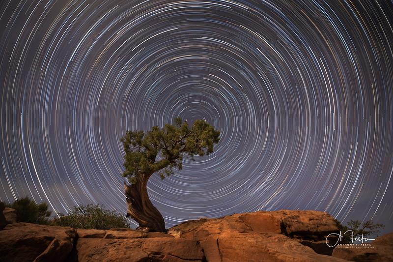Cypress Star Trails