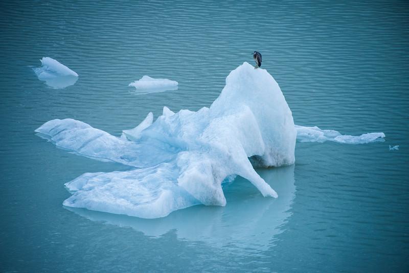 Portrait of an Iceberg and Heron