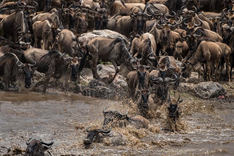 Crossing the Mara River, Serengeti National Park