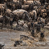 Crossing the Mara River, Serengeti National Park