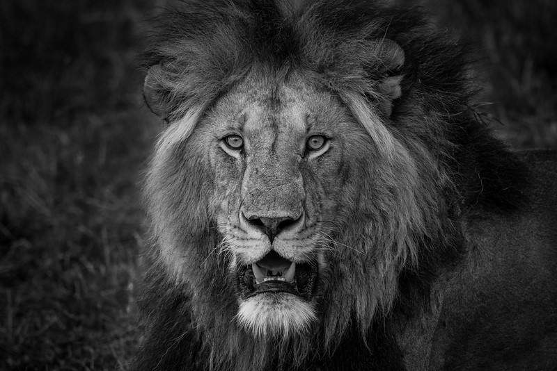Portrait of the King in Black & White