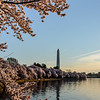 The Tidal Basin in Spring