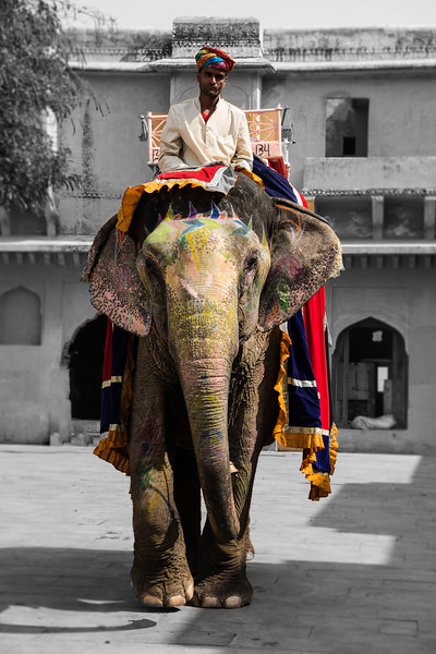 A Colorful Elephant in Jaipur