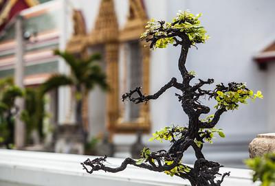 Wat Pho Tree