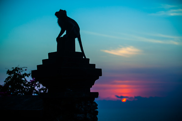 Monkey At Uluwatu Sunset