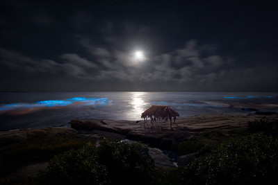 Bioluminescent Moonset