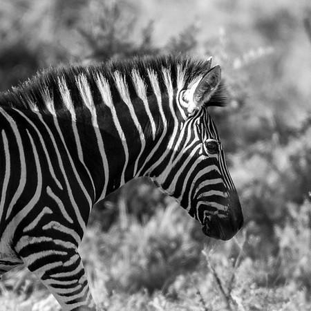Shades of black & white