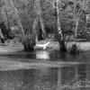 Swan in the rain