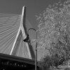 Ants eye view Black and White Zakim Bridge