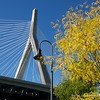 Zakim Bridge in September