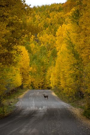 Uncompahgre National Forest, Colorado