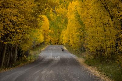 Owl Creek Pass, Ridgeway, Colorado (2016)