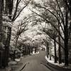 Celloscape 5: Cello Road