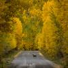 <i>Uncompahgre National Forest, Colorado</i>