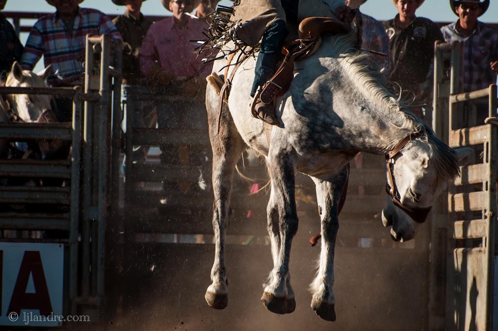 bucking-bronco-cowboys