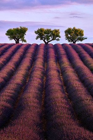Oh, the lavender smell...