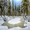 Frozen florest