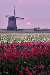 This is Holland