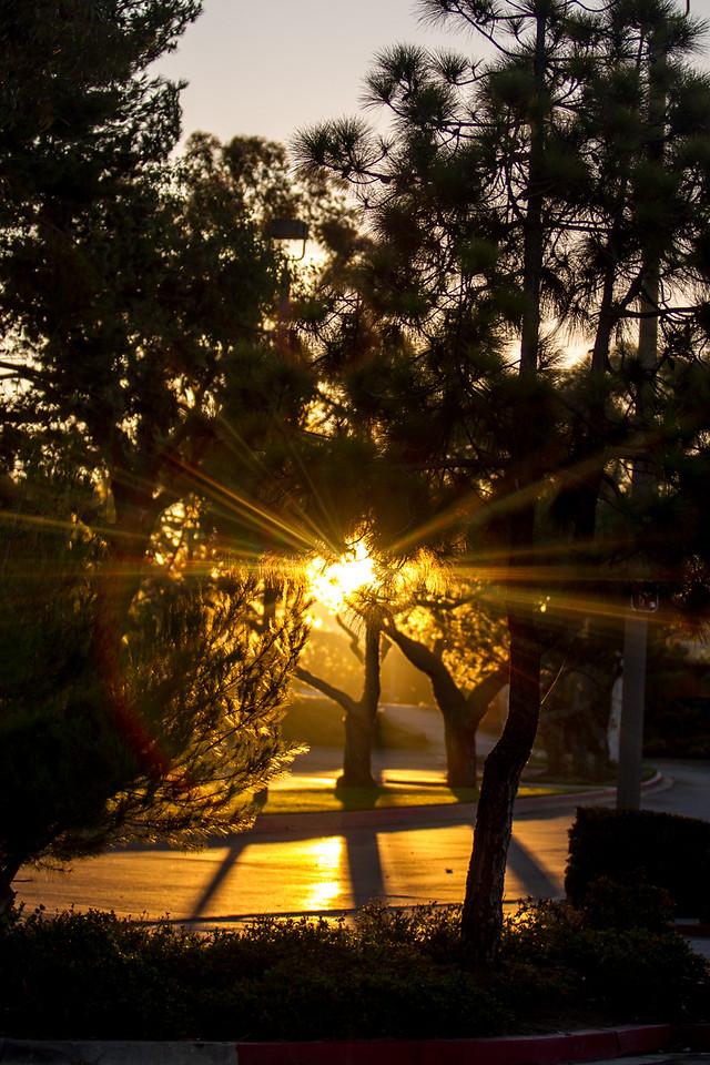 Sunrise Through the Trees - Dana Point, CA