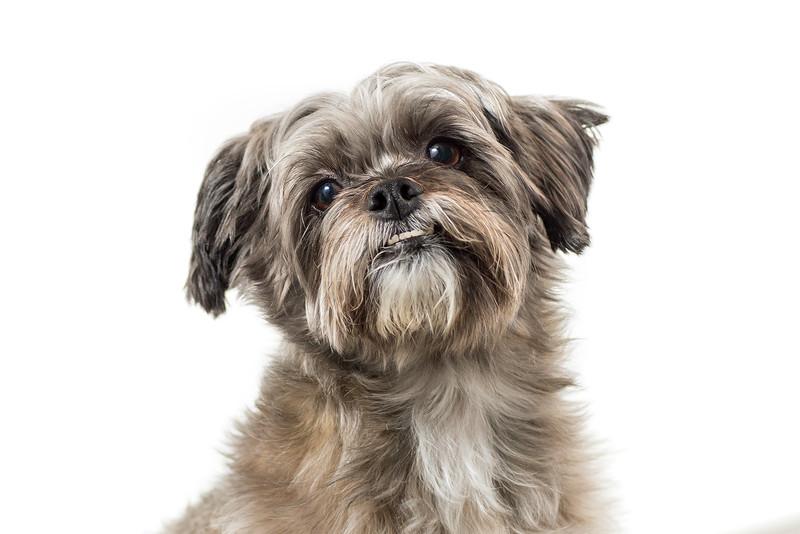adorable-dog-milwaukee