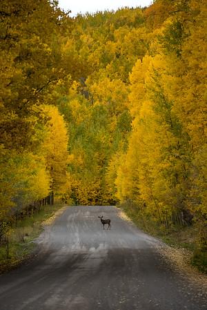 Uncompahgre National Forest, Colorado (2016)